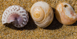 Seashells laying in the sand Royalty Free Stock Photography