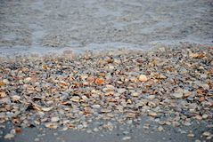 Seashells. Laying in the surf of a Florida beach Royalty Free Stock Photography