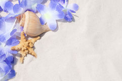 Seashells and lei on beach Royalty Free Stock Images