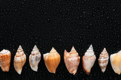 Seashells  lie on a line Royalty Free Stock Photos