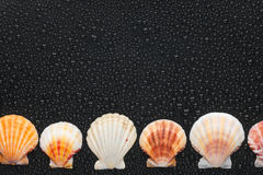 Seashells  lie on a par with. Place for your text Stock Images