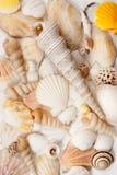 Seashells. Stock Image