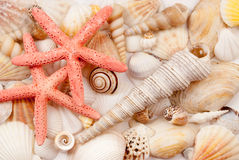 Seashells. Royalty Free Stock Image