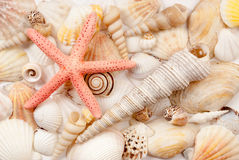 Seashells. Stock Photo