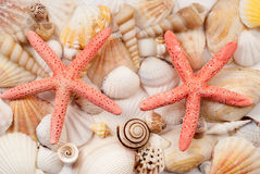 Seashells. Stock Photography