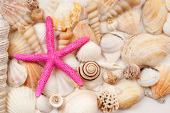 Seashells. Lots of different seashells and scallops Stock Image