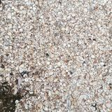 Seashells on Lyngså Beach. Lyngså Beach, denmark Stock Images
