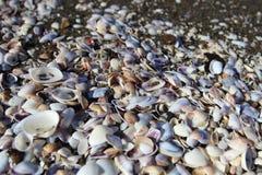 The seashells on Magnetiti resort near Ureki village, Georgia. Magnetiti is the resort with black magnetic sand on the Black Sea coast in Georgia near Ureki Stock Photography