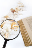 Seashells and magnifier. Seashells, magnifier, and old blank book on the white background Royalty Free Stock Photography
