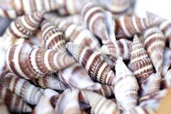 Seashells at market. Stock Image