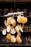 Seashells at market. Stock Photo