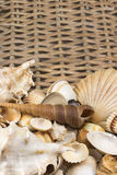 Seashells n the lower side of wicker baket. Vertically. Stock Photography