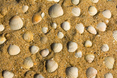 Seashells na areia Fotos de Stock Royalty Free