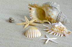 Seashells na areia fotos de stock royalty free