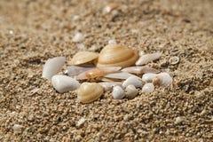 Seashells na areia Fotografia de Stock