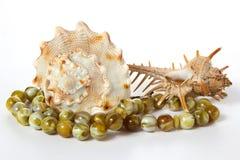 Seashells na biały tle Zdjęcie Stock