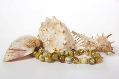 Seashells na biały tle Zdjęcie Royalty Free