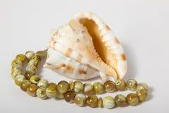 Seashells na biały tle Zdjęcia Royalty Free