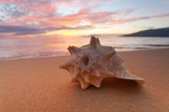 Seashells na brzeg Fotografia Royalty Free