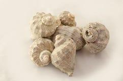 Seashells na górze одина другого Стоковое Фото