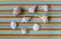 Seashells na kolorowym tle Fotografia Stock