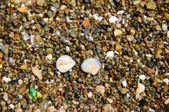 Seashells na otoczaku Obrazy Royalty Free
