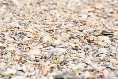 Seashells na piaskowatej plaży blisko morza, letni dzień obraz royalty free