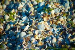 Seashells na piaskowatej plaży w szczegółach zdjęcie stock