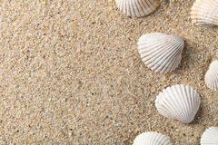 Seashells na piasku Fotografia Royalty Free
