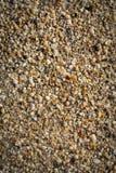 Seashells na plażowej teksturze Zdjęcie Stock