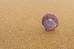 Seashells na plaży 28 Zdjęcia Royalty Free