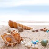 Seashells na plaży Obraz Stock