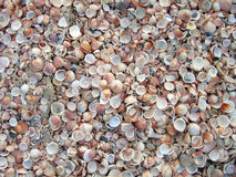 Seashells na praia imagem de stock