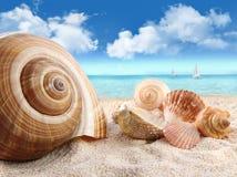 Seashells na praia Foto de Stock