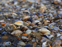 Seashells na praia Imagens de Stock Royalty Free