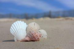 Seashells na praia com cerca Fotografia de Stock Royalty Free