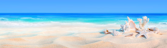 Seashells na seashore obrazy stock