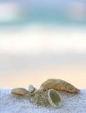 Seashells nas toalhas imagens de stock royalty free