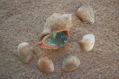 Seashells аnd aquamarine on the sand. Seashells lying on the sand in a semicircle Royalty Free Stock Photos