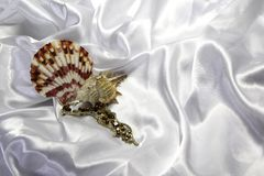 Seashells and necklaces Royalty Free Stock Image
