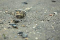 Seashells nella sabbia Fotografie Stock