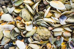 Seashells on a New Zealand beach Stock Images