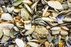 Seashells on a New Zealand beach. A variety a seashells in natural configuration on a New Zealand beach stock images