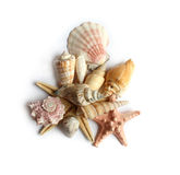 Seashells no fundo branco Foto de Stock Royalty Free