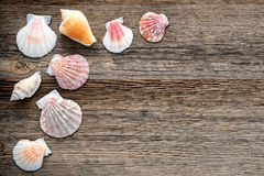 Seashells no fundo de madeira resistido velho das pranchas Foto de Stock Royalty Free