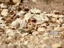 Seashells no seashore imagem de stock
