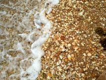Seashells and ocean. Sea and seashells stock photos