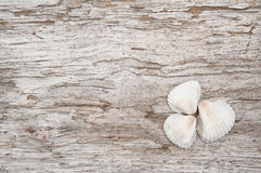 Seashells on the old rude wood Stock Images