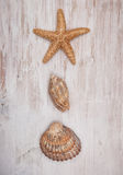 Seashells on the old shabby chic wood background Royalty Free Stock Photo