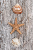 Seashells on the old shabby chic wood Royalty Free Stock Photos